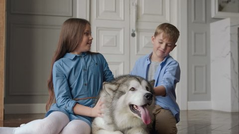 Alaskan Malamute or Big Siberian Husky with Smiling Person on Floor in Domestic Interior. Little Playful Children Playing with Pedigree Pretty Dog. Recreation or Carefree Life. Having Fun Close-up