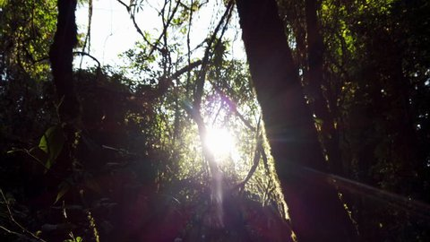 4K Video Low angle tracking crane shot of of sun glimmering flares light peeking through the trees in forest. Beautiful sun shining with lens flares and sunbeams over natural green leaf of trees.