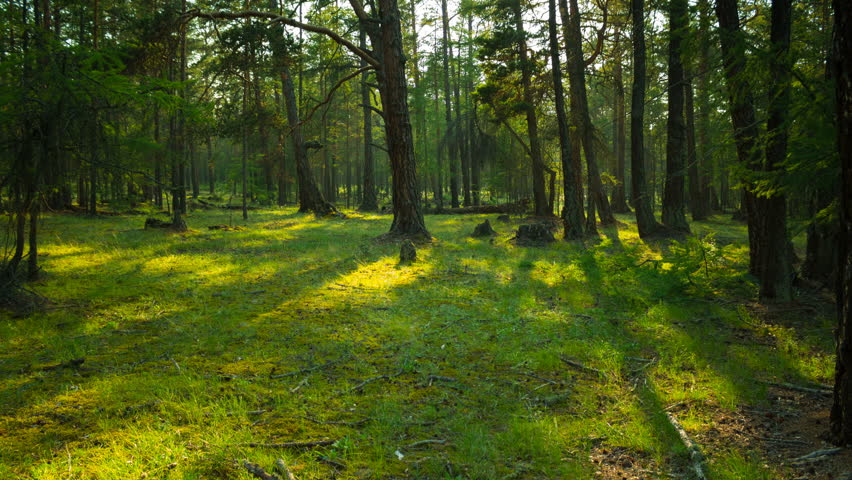 In the green forest. Movement of tree shadows. Time lapse. Zoom In. 4K | Shutterstock HD Video #1026894935