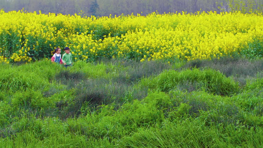 A little boy and a little girl strolls slowly through a green and lush meadow alongside a large field of bright yellow rape flowers in warm spring sunshine.   Shutterstock HD Video #1027064675