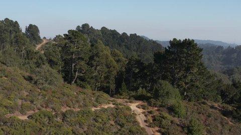 Rising over Large Eucalyptus trees in Berkeley hills aerial Northern California