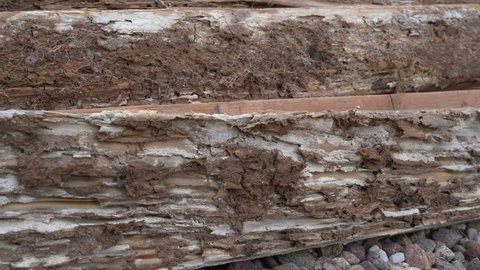 Dolly shot of wood damaged by termites