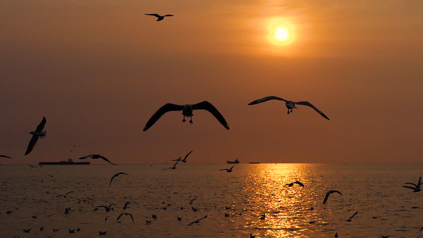 Slow motion of flock of Seagull bird flying over the sea in the coast with sunlight at sunset time | Shutterstock HD Video #1027491695