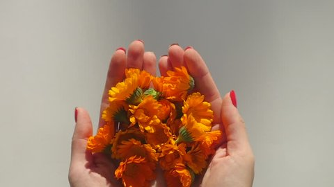 Woman's hands hold and then throw calendula in slow motion