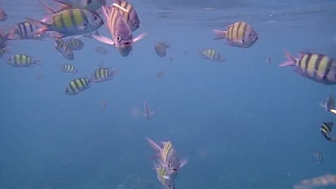 appy family - mother, child in snorkeling mask dive underwater with tropical fishes in coral reef sea pool. Underwater scene with fish