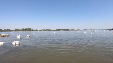 Beautiful Danube river in Zemun municipality in Belgrade, Serbia. Swans in the river. Small anchored fishing boats.
