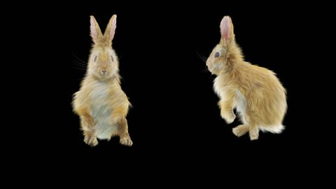 rabbit CG fur 3d rendering animal realistic Animation Loop Alpha channel dance composition 3d mapping