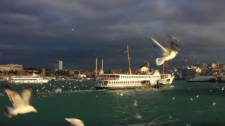 Cruise ship sailing towards Kadikoy in Istanbul. City ferryboat cruising through the birds. Seabirds feeding in the air  #10283906