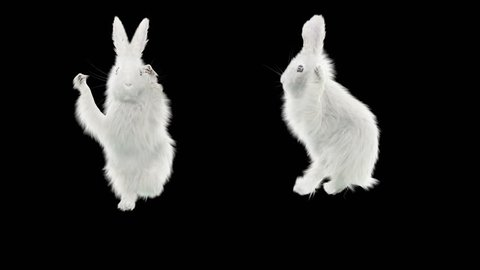 White Rabbit CG fur 3d rendering animal realistic Animation  Loop Alpha matte dance composition 3d mapping cartoon