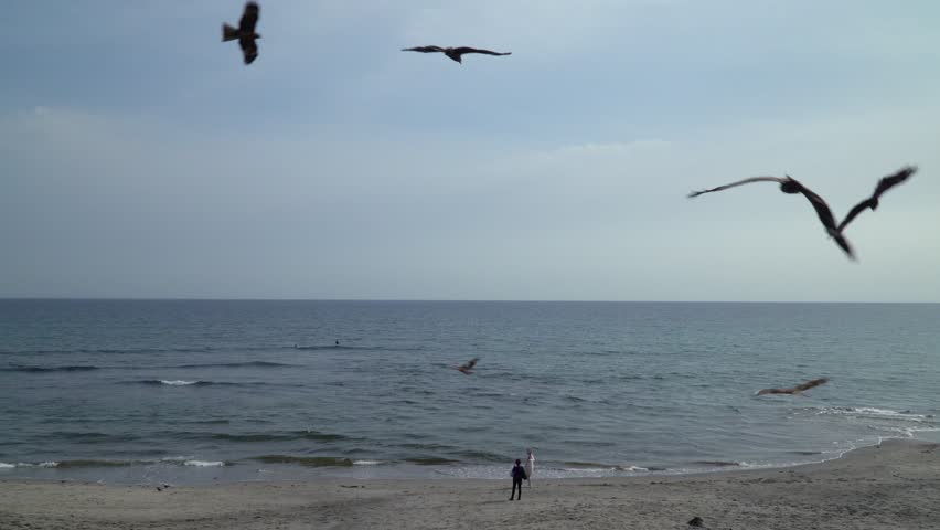 "KAMAKURA, KANAGAWA / JAPAN - APRIL 23 2019 : Landscape of the shore of ""Shichirigahama"". Many birds are flying in the sky. Birds are trying to take food that tourists have. 