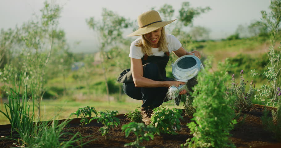 Happy smiling middle aged woman watering her lavender plant in cute herb garden, retirement activities | Shutterstock HD Video #1028452175
