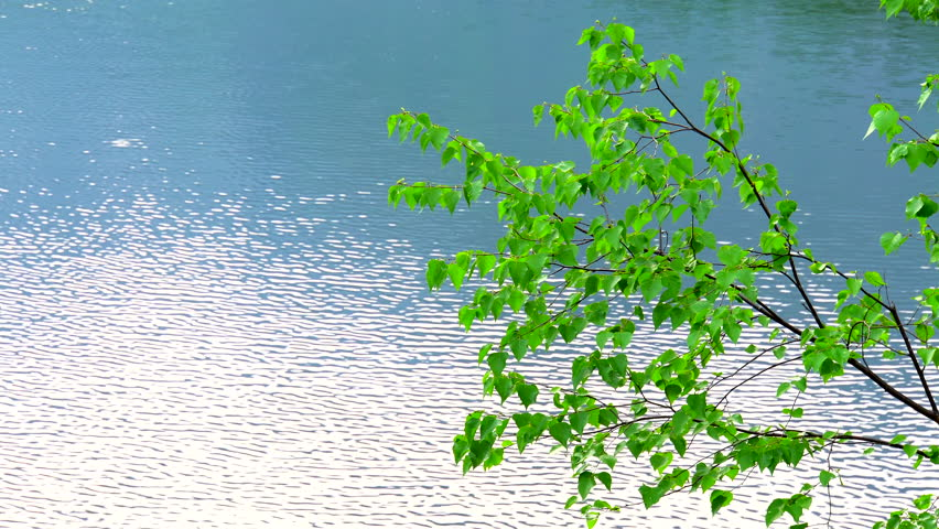 Green branch lake background . | Shutterstock HD Video #1028608475