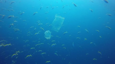 Plastic bags environmental pollution problem. Bags and fish in ocean