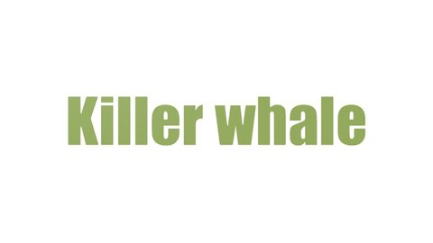 Killer Whale Tag Cloud Animated Isolated