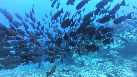 Colorful seaded on the coralreef. Beautiful fishes in underwoter world. Bright sea buttom landscape full of colorful fish. Underwater ocaen aquatic wildlife. Gigantic shoal of fish