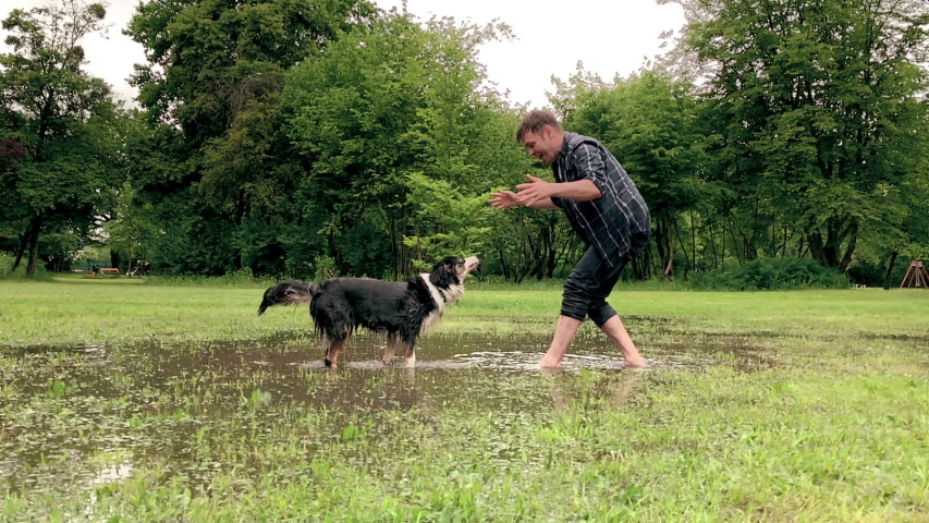 Slow Motion. Australian Shepherd Dog with owner playing on green grass at park. Happy barefoot Man and wet Aussie run on watery meadow after rain, water sprinkles. Dog and people enjoy at outdoors.   Shutterstock HD Video #1030075325