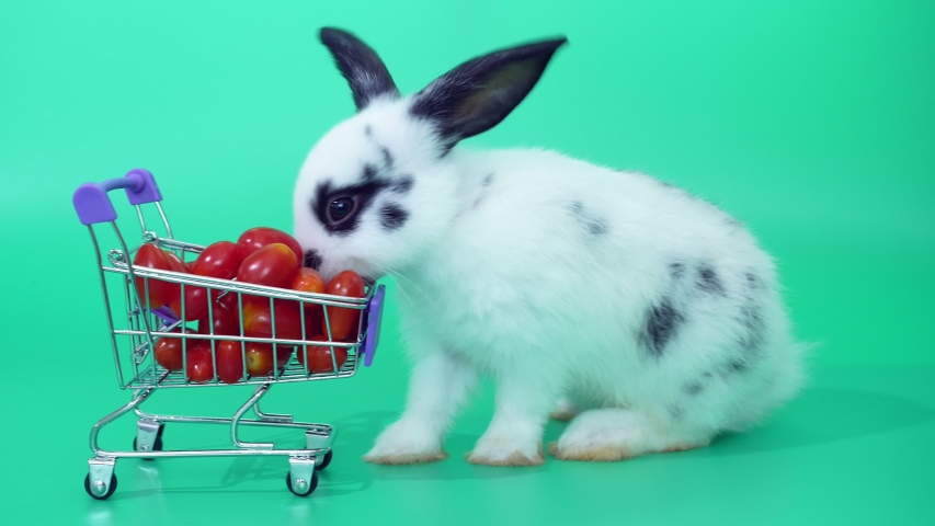 Black and white adorable baby rabbit on green screen.  Cute baby rabbit eating tomatoes in Shopping cart  | Shutterstock HD Video #1030148675