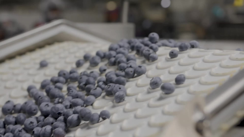 A Blueberry Processing and packaging Plant   Shutterstock HD Video #1030357595