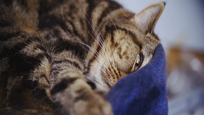 Creepy cat eyes open while sleeping 4K | Shutterstock HD Video #1031108585