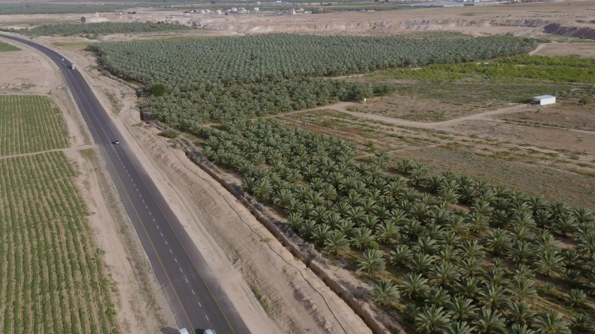 Flying above palms plantation in south Israel kibbutz, 4k drone aerial view footage | Shutterstock HD Video #1031504375