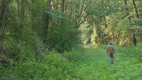 A young man with guitar wanders through the ginormous green forest