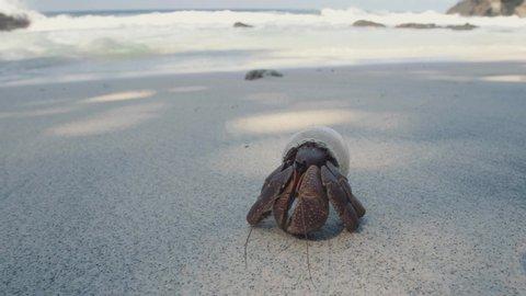 Hermit crab in plastic bottle