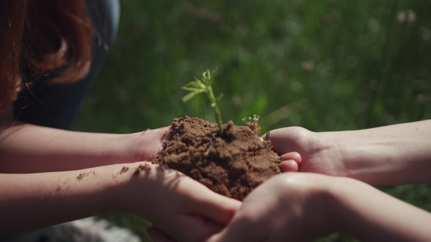 Save planet from global warming. Tree planting. Close-up of female hands holding baby tree in soil on a sunny day in the park.   Shutterstock HD Video #1033141835
