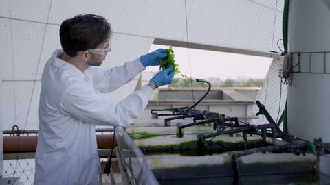 Scientist reviewing lab-grown algae for research in biotech and agronomy