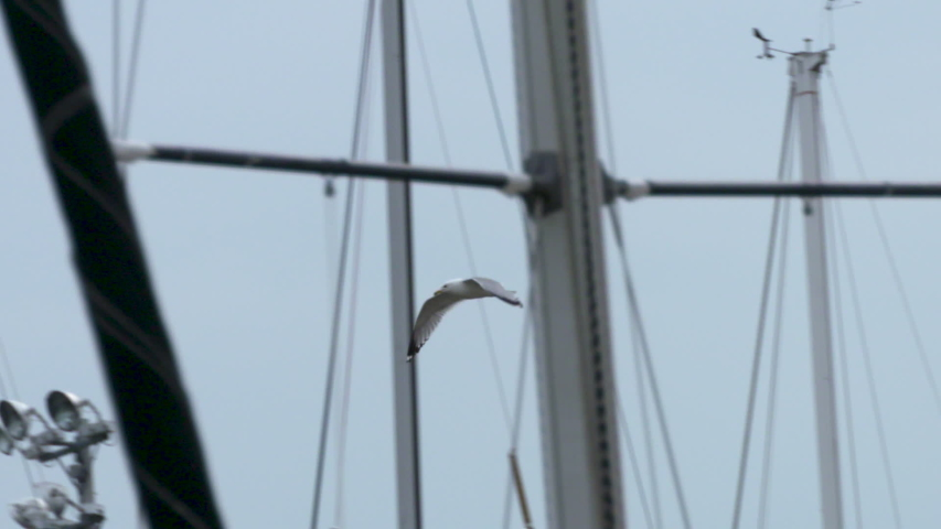 Seagull flying around sailboat masts at a marina   Shutterstock HD Video #1035028235