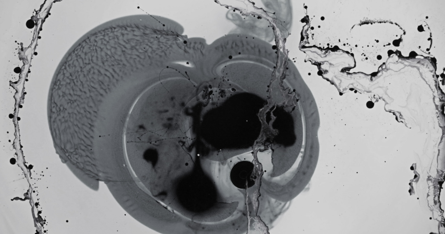 Black and White liquid ink / paint drop stain on white paper background / paint bleed Bloom, with circle organic flow expansion, splatter spreading on pure backdrop texture \ petri dish | Shutterstock HD Video #1035028985