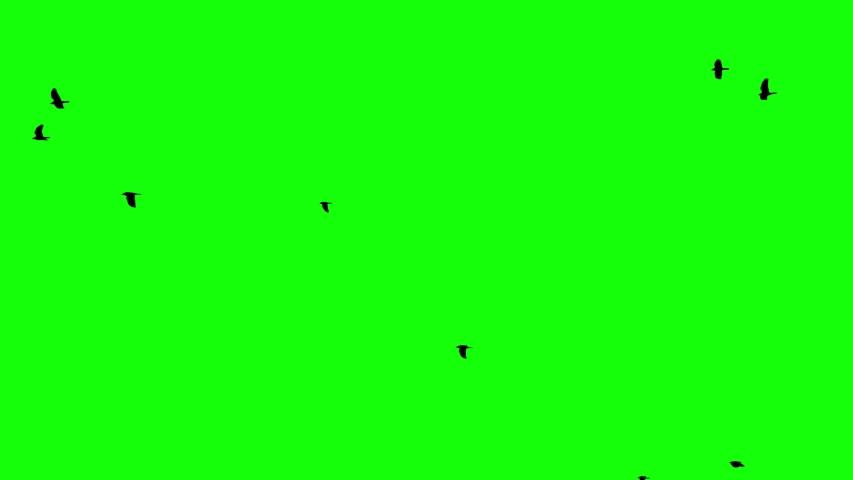 Crows fly right to left on a green screen looped | Shutterstock HD Video #1035514505