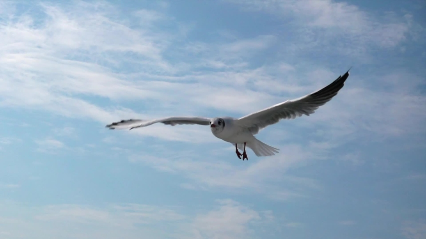Seagull flying against the blue sky.  Big seagull soaring over the Mediterranean sea. Greece. Slow motion. HD | Shutterstock HD Video #1035821435