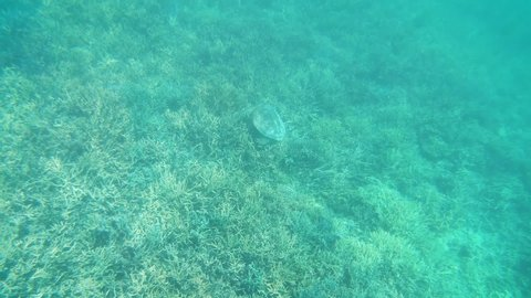 Underwater video of a green sea turtle on a coral reef in the clear, turquoise waters at Isle Signal in New Caledonia, French Polynesia, South Pacific Ocean.