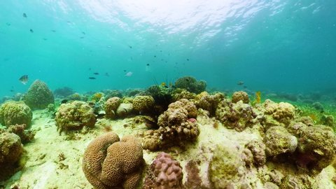 Tropical fishes and coral reef at diving 360 panorama. Underwater world with corals and tropical fishes. Camiguin, Philippines.