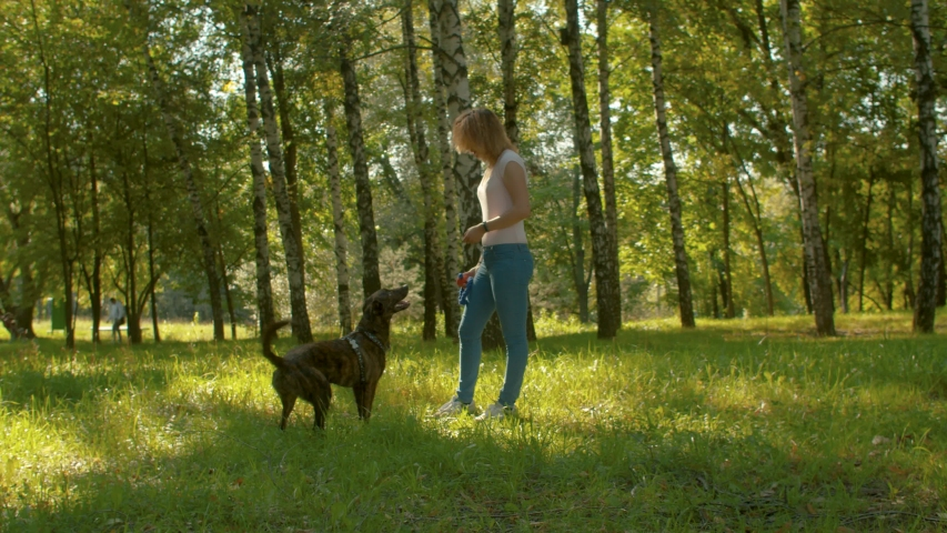 Young beautiful woman playing with the dog in the park. She is throwing a dogs toy, and the dog jumping and catching it | Shutterstock HD Video #1036449905