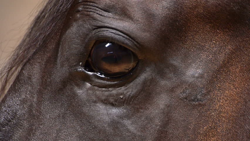 Beautiful brown horse eye close up.
