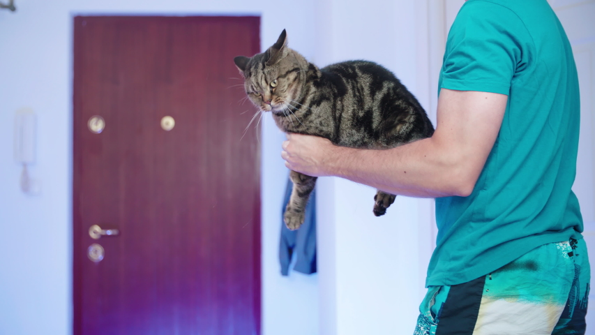 Cat as a shotgun weapon funny video 4K. Static medium shot of person and cat playing warfare in the apartment. | Shutterstock HD Video #1036954835