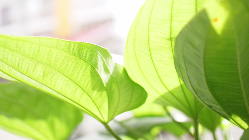 Fresh green leaves at the garden in the morning. Natural sunlight | Shutterstock HD Video #1037178545
