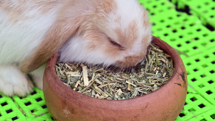 4K CLOSE UP: Cute fluffy light brown baby bunny eating food. | Shutterstock HD Video #1037333915