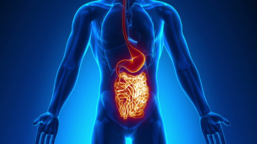 Male Abdominal Organs Medical Scan Anatomy Stock Footage Video
