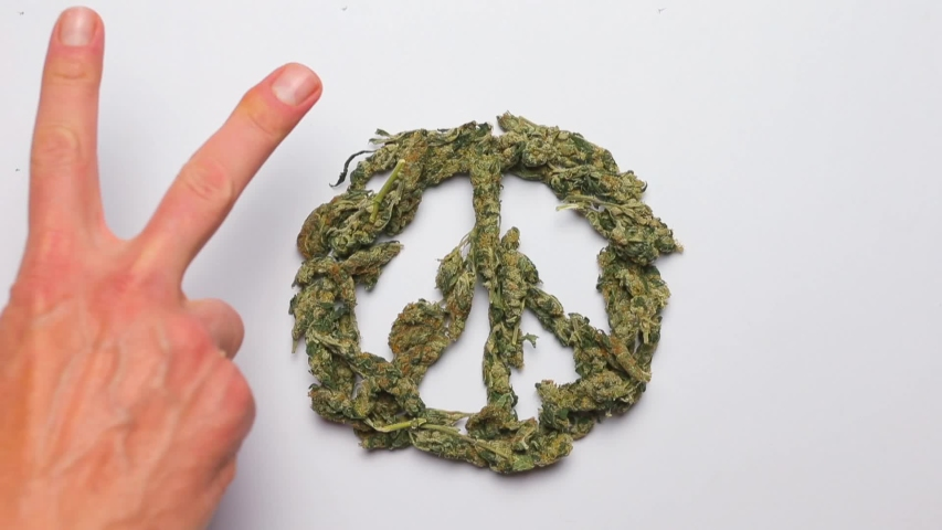 The pacifik sign made of marijuana and the pacifik sign made by people hands, on a white background