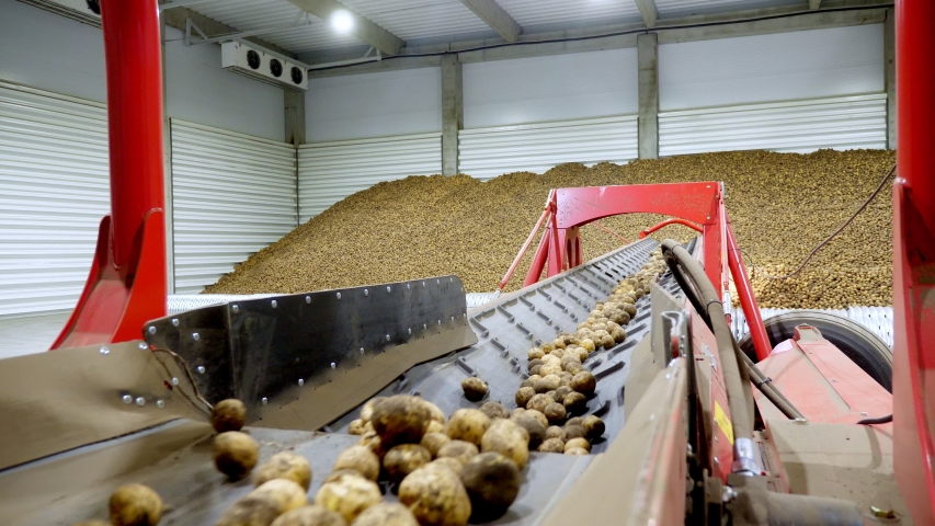 Close-up, Potatoes move on special conveyor machinery belt and fit into a storage room, a warehouse for winter storage. potato harvesting, crop | Shutterstock HD Video #1038773915