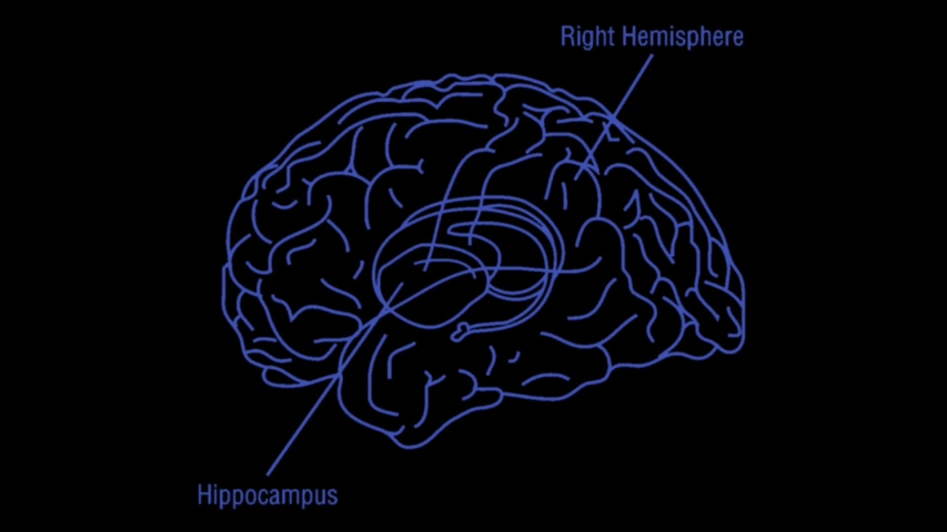 The hippocampus in the brain under the x-ray.  | Shutterstock HD Video #1039089935