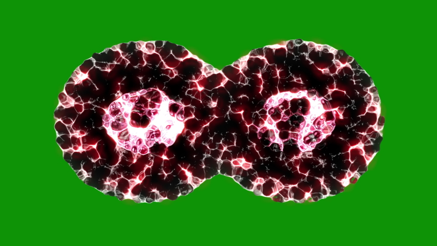 Binary fission cells division motion graphic on green screen background  | Shutterstock HD Video #1039233125
