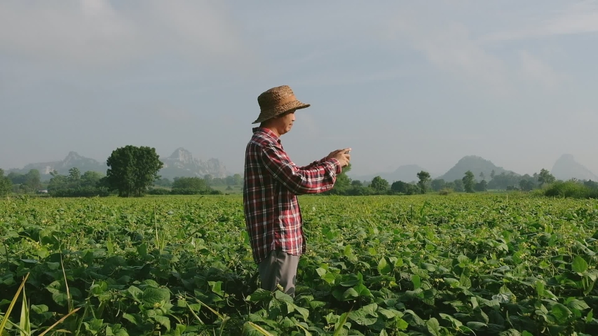 Farmers are using smart phones to convert soybeans. #1039524545