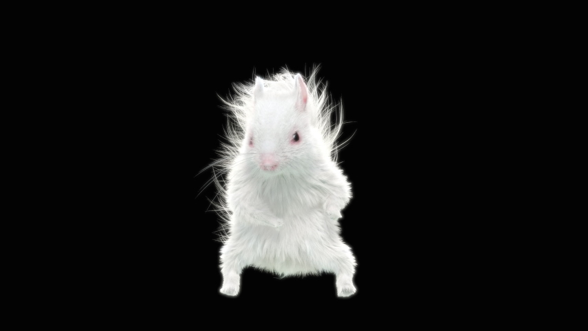Squirrel Dance CG fur 3d rendering animal realistic CGI VFX Animation Loop  composition 3d mapping cartoon, with Alpha matte | Shutterstock HD Video #1039693025