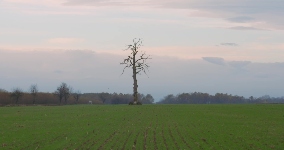 Single tree in the valley. Leafless strange tree in the middle of the field. Lifeless between alive concept. | Shutterstock HD Video #1040989325