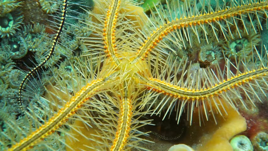 Caribbean Sea Animal Life: Stock Video Of Underwater Life, Closeup Video Of A