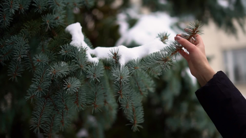Slow motion of hand shaking the pine branch with snow. Holiday season in December | Shutterstock HD Video #1042371955