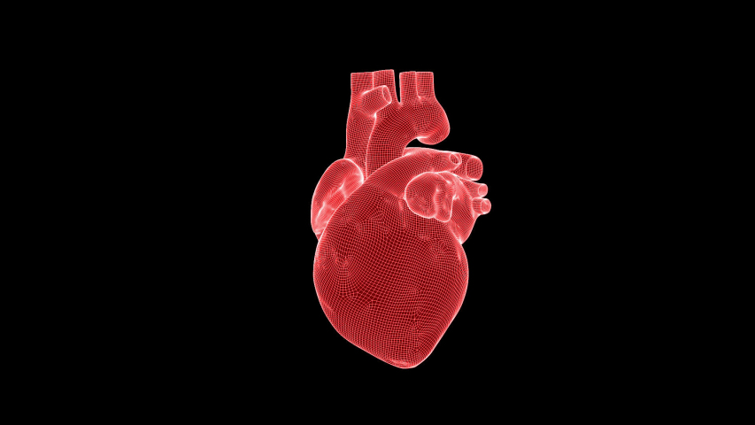 Beating human heart wireframe rotating with Alpha Channel, seamless loop | Shutterstock HD Video #1042758865